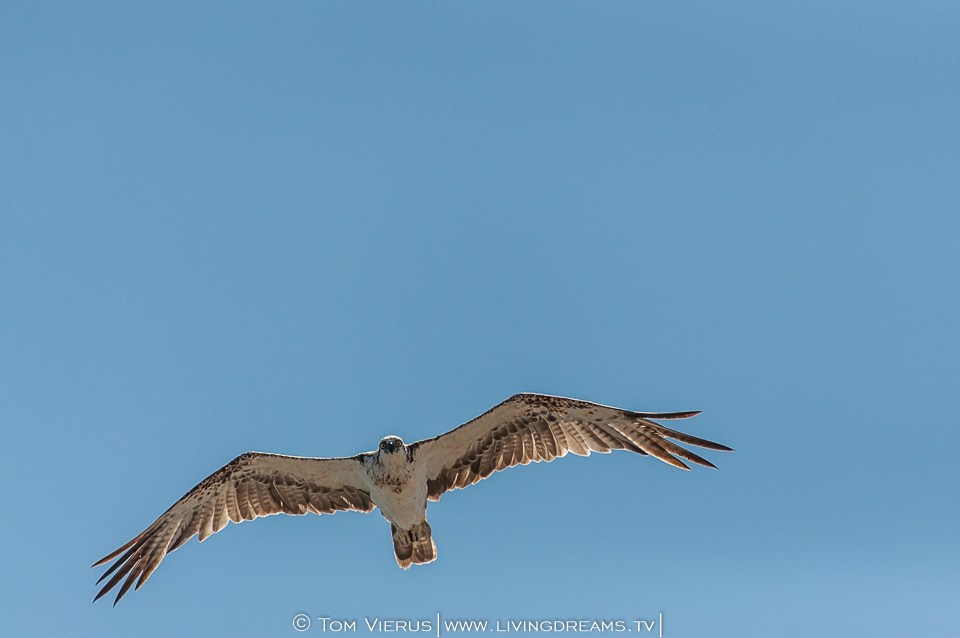 What an incredible wingspan!