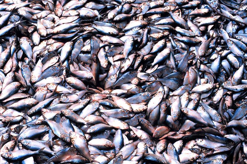 Fisch im meer online-dating