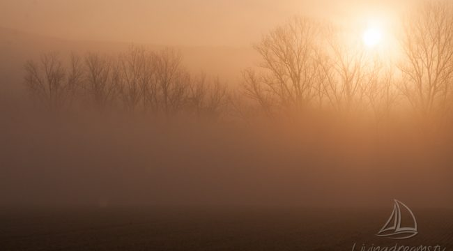 Misty morning in the field of Reichensachsen