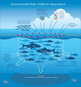 Risiken der Aquakultur. Quelle:Quelle:http://commons.wikimedia. org/wiki/File :Risks_aquaculture_550.jpg
