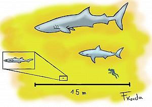 Haie können sich untereinander stark unterscheiden: ganz oben sehen wir einen bis zu 14m großen Walhei, darunter der Weiße Hai, der fast 7m erreichen kann. Der kleinste Hai, der Zwerglaternenhai, erreicht nur ca. 20cm.