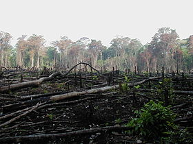 Deforestation in Mexico