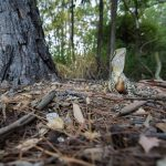 Animals of Australia – a little Film Expedition in Queensland