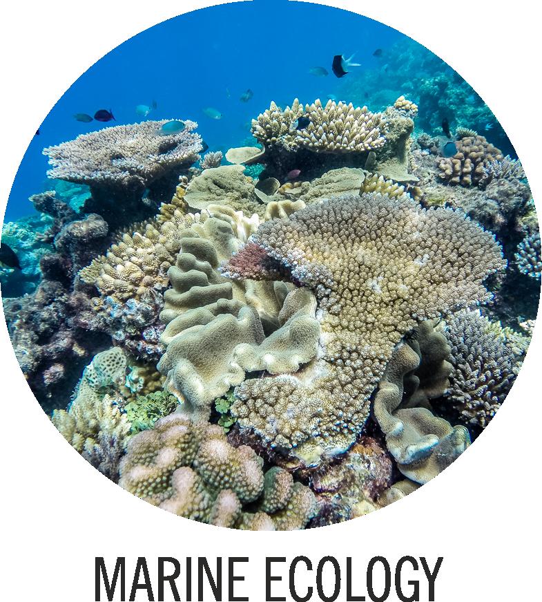Marine Ecology Logo neu