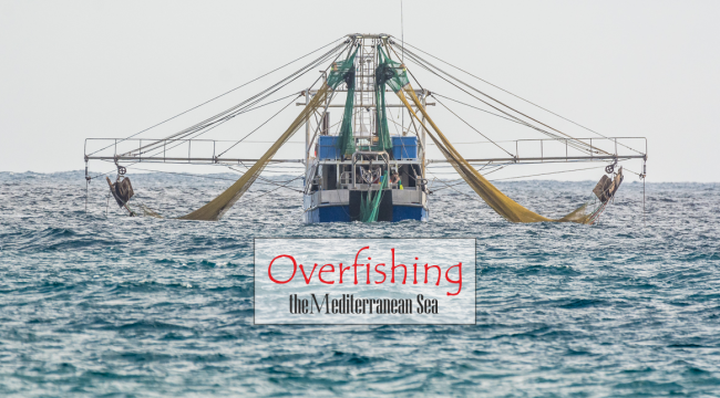 Overfishing the Mediterranean Sea | Common Fisheries Policy of the EU