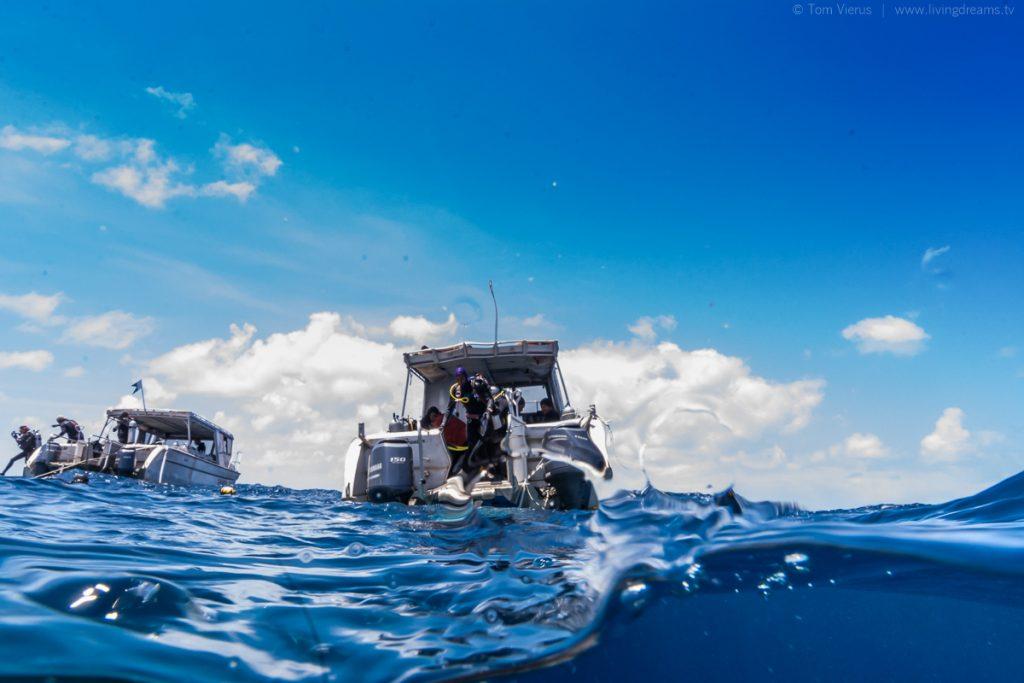 Beqa Adventure Divers Boat Fiji - Feeding Bull Sharks