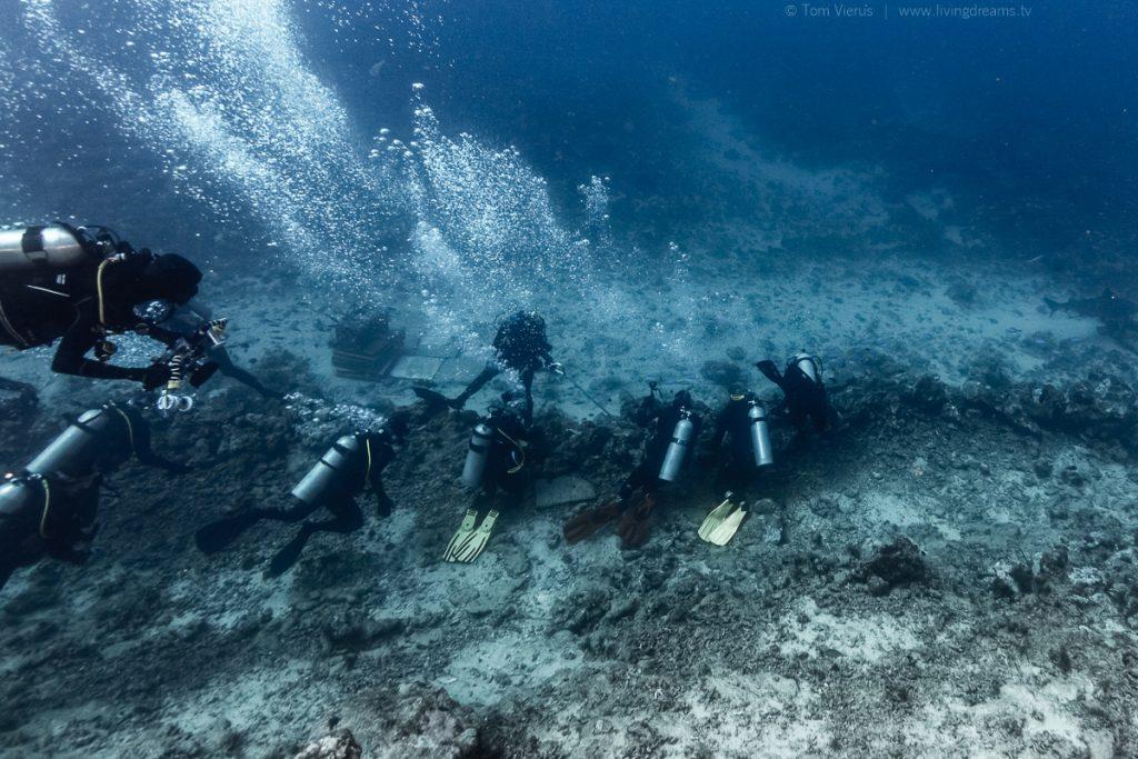Beqa Adventure Divers Boat Fiji - Feeding Bull Sharks in the Beqa Channel