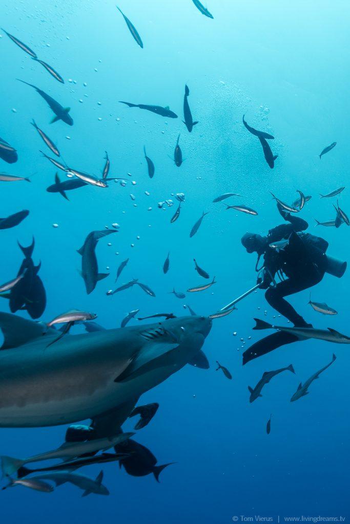 Beqa Adventure Divers Fiji - Bull Sharks-4