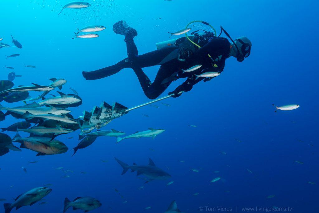 Beqa Adventure Divers Fiji - Bull Sharks-6