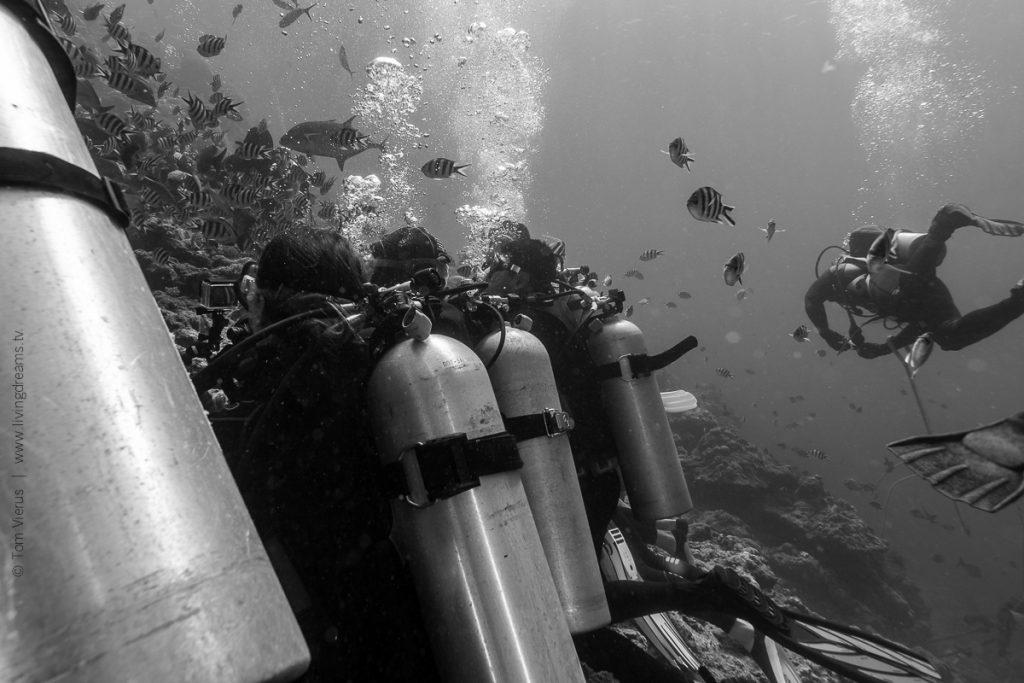 Beqa Adventure Divers Fiji - Bull Sharks-8