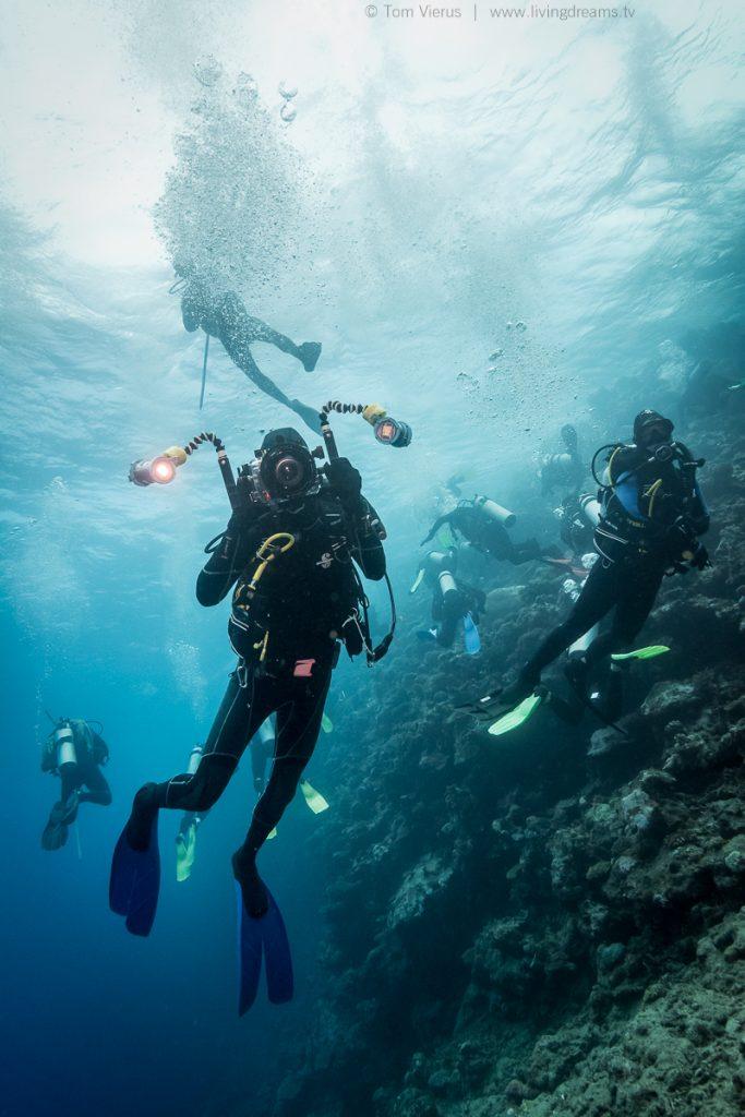 Beqa Adventure Divers Fiji - Feeding Bull Sharks-3