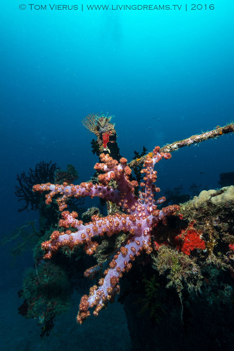 Tropical Coral Reefs, Corals, What are reefs?