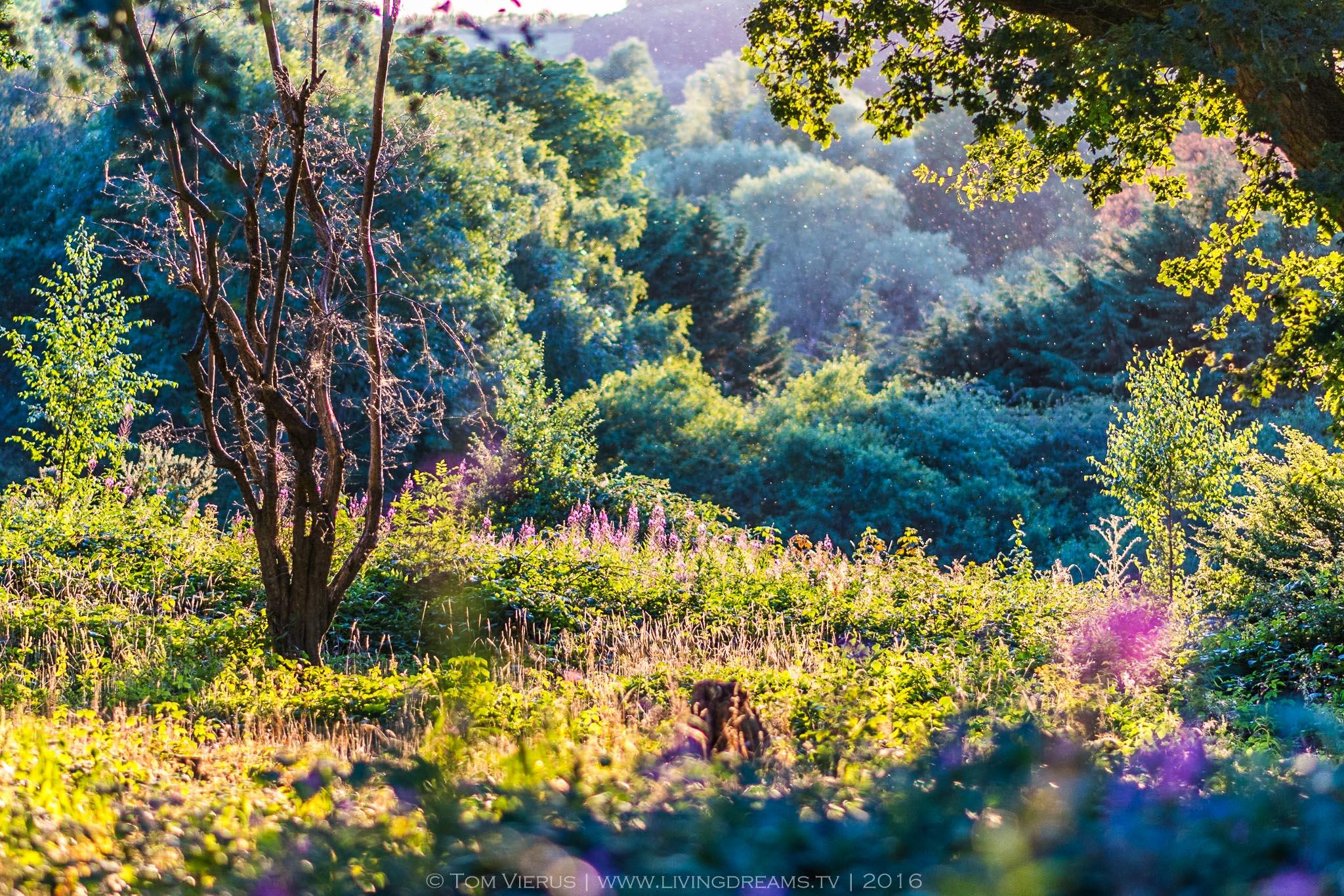 Nature, Landscape, Scenic, England, UK, Winchester