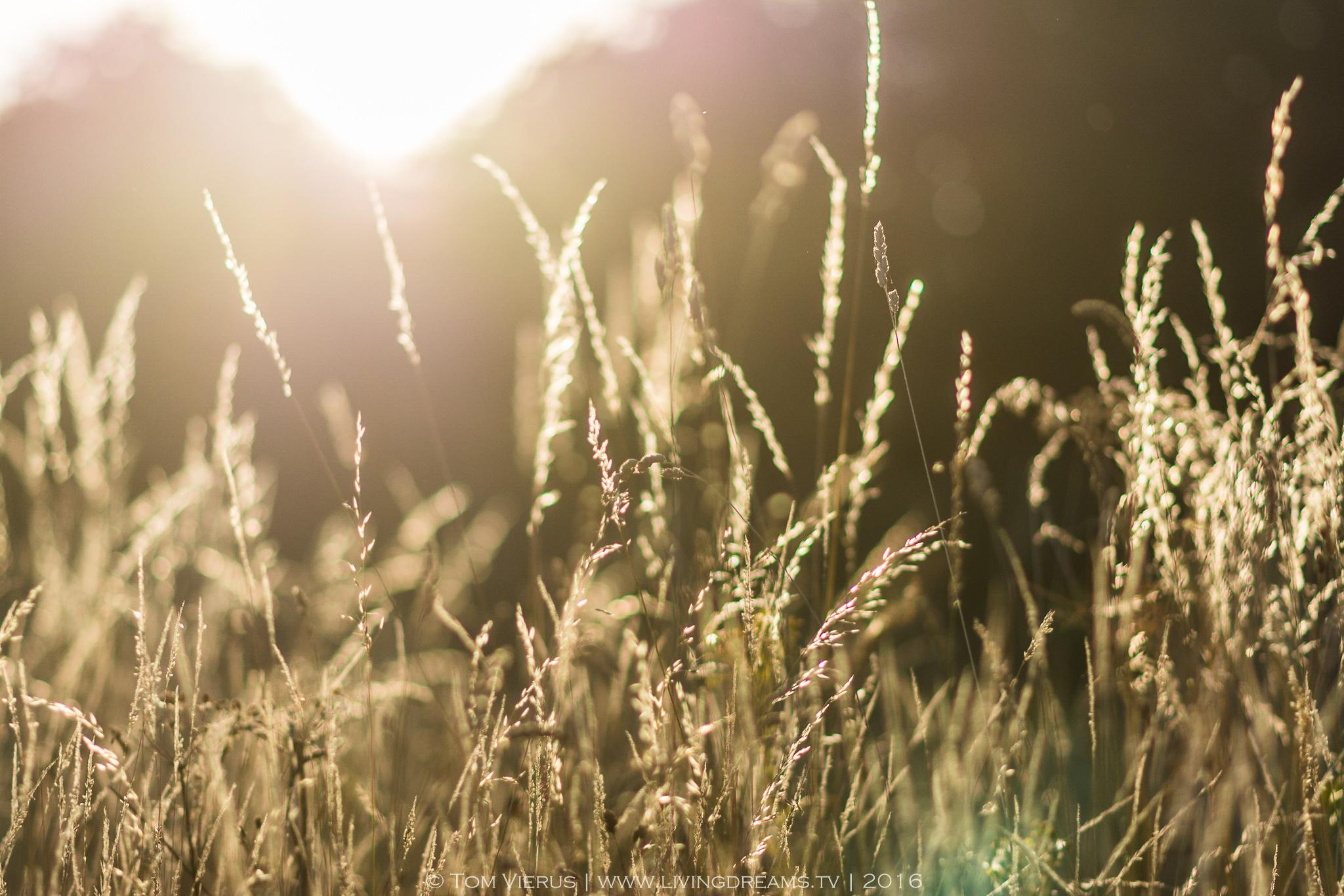 Sun, Nature, England, Winchester