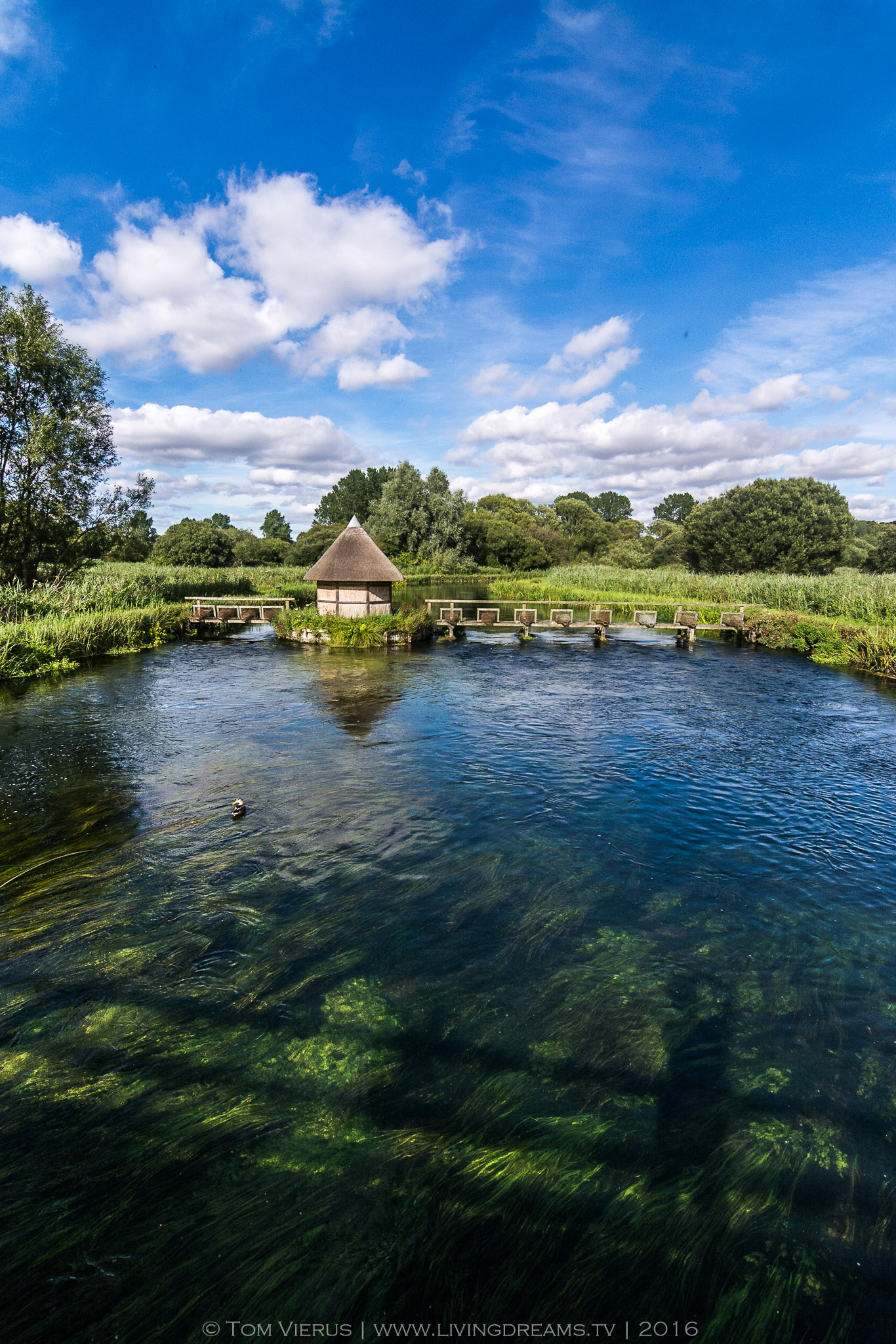 Nature reserve, England, UK, Winchester, Southampton