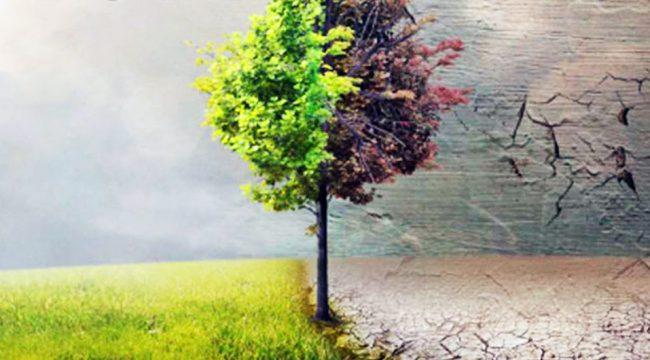 Before the flood, Leonardo Dicaprio, Environment