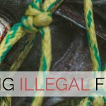 Interview with 'The Black Fish': fighting illegal fishing
