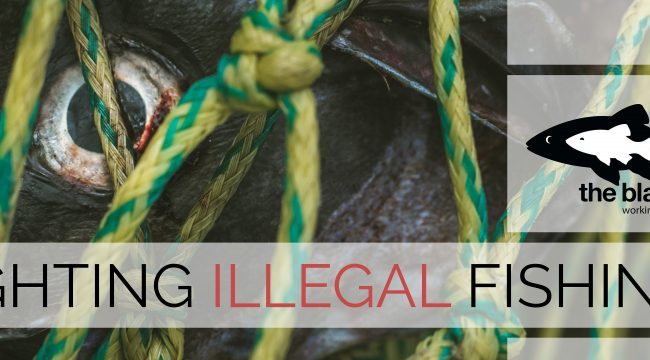 the black fish, overfishing, illegal fishing, activism