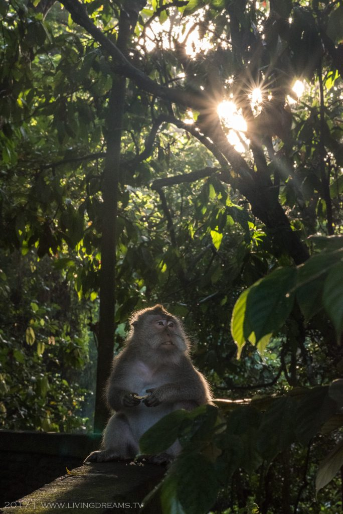 Monkey, Long-tailed Macaque, 2017, Photography, Ubud