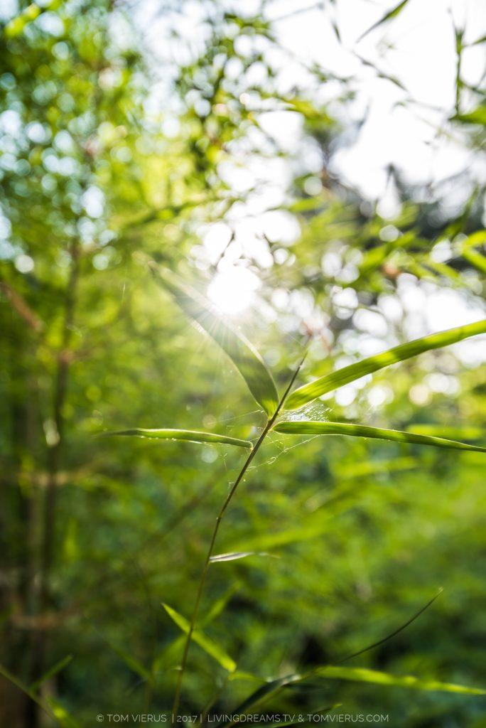 Art, Bali, bamboo, sun