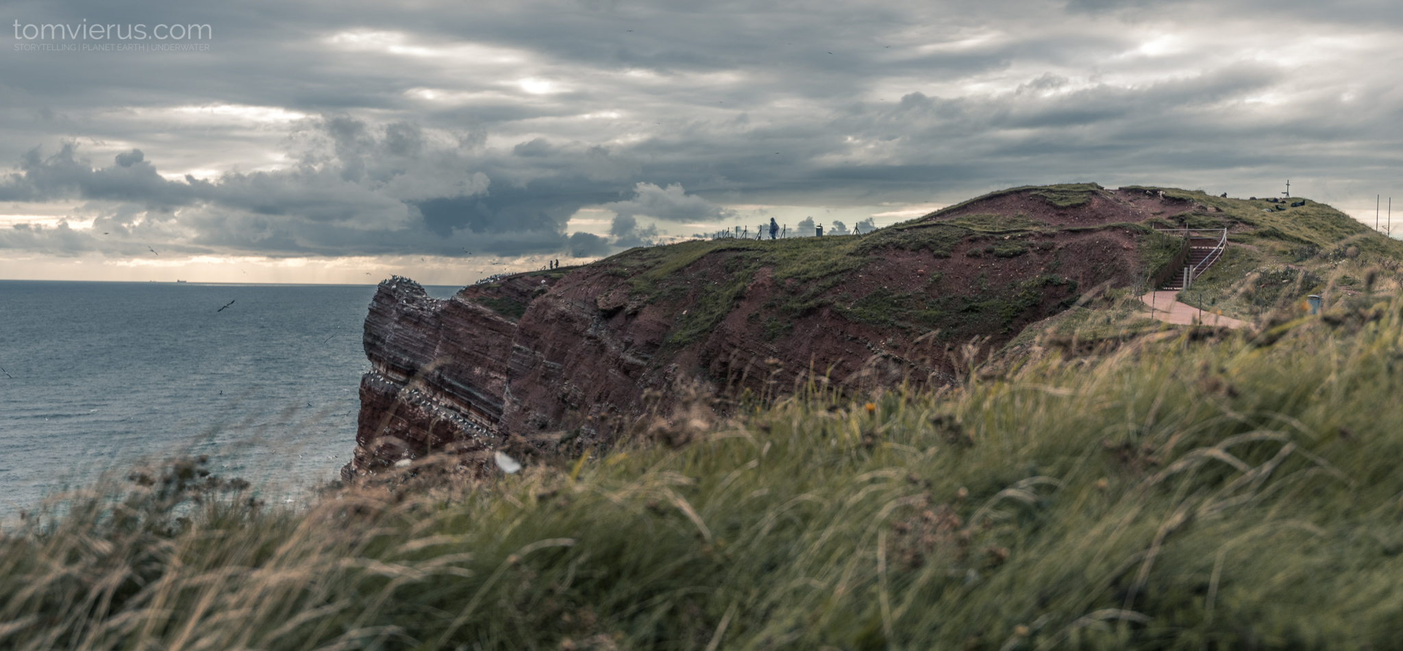 Helgoland, seabirds, cliffs