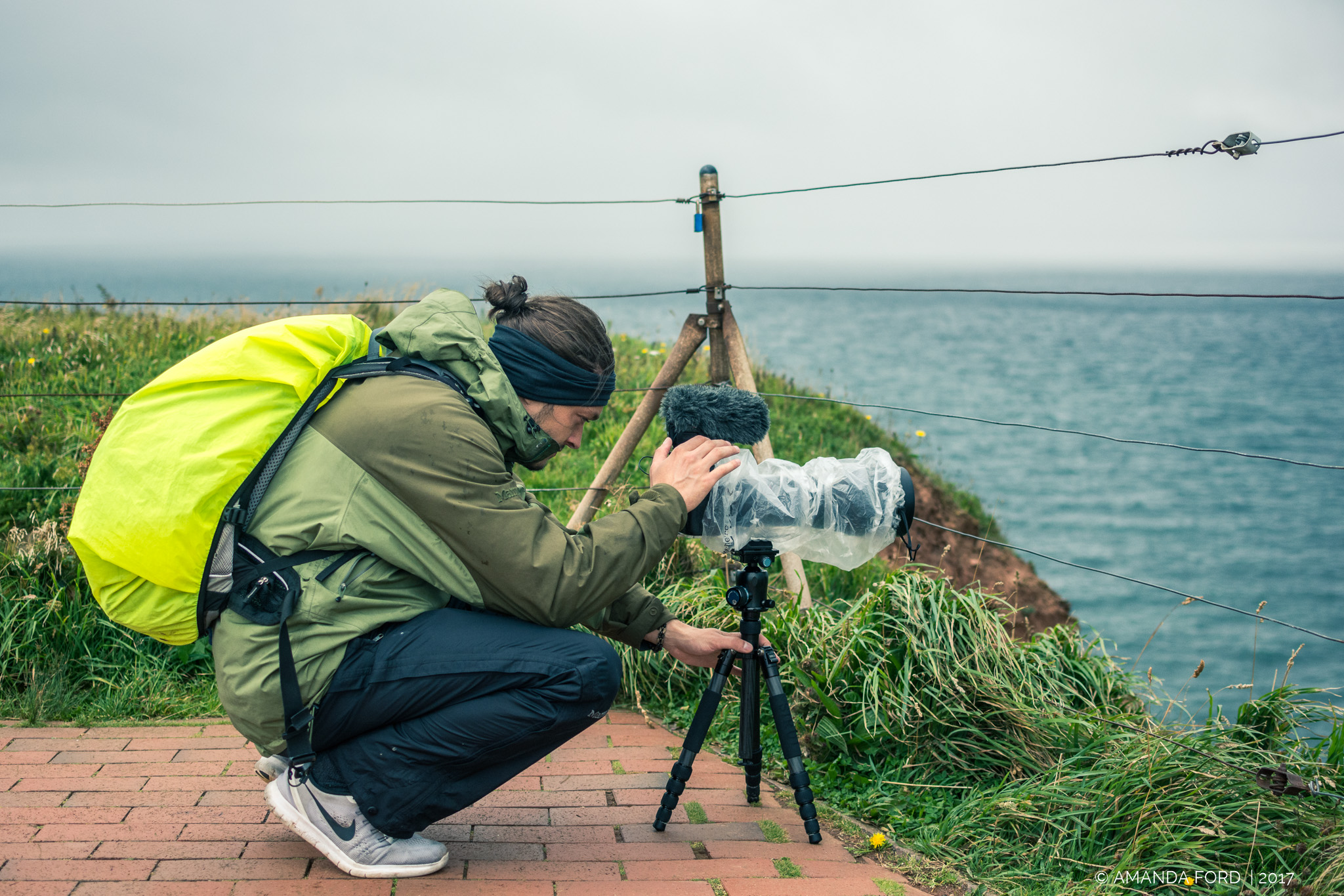 Helgoland, seabirds, filming, photography