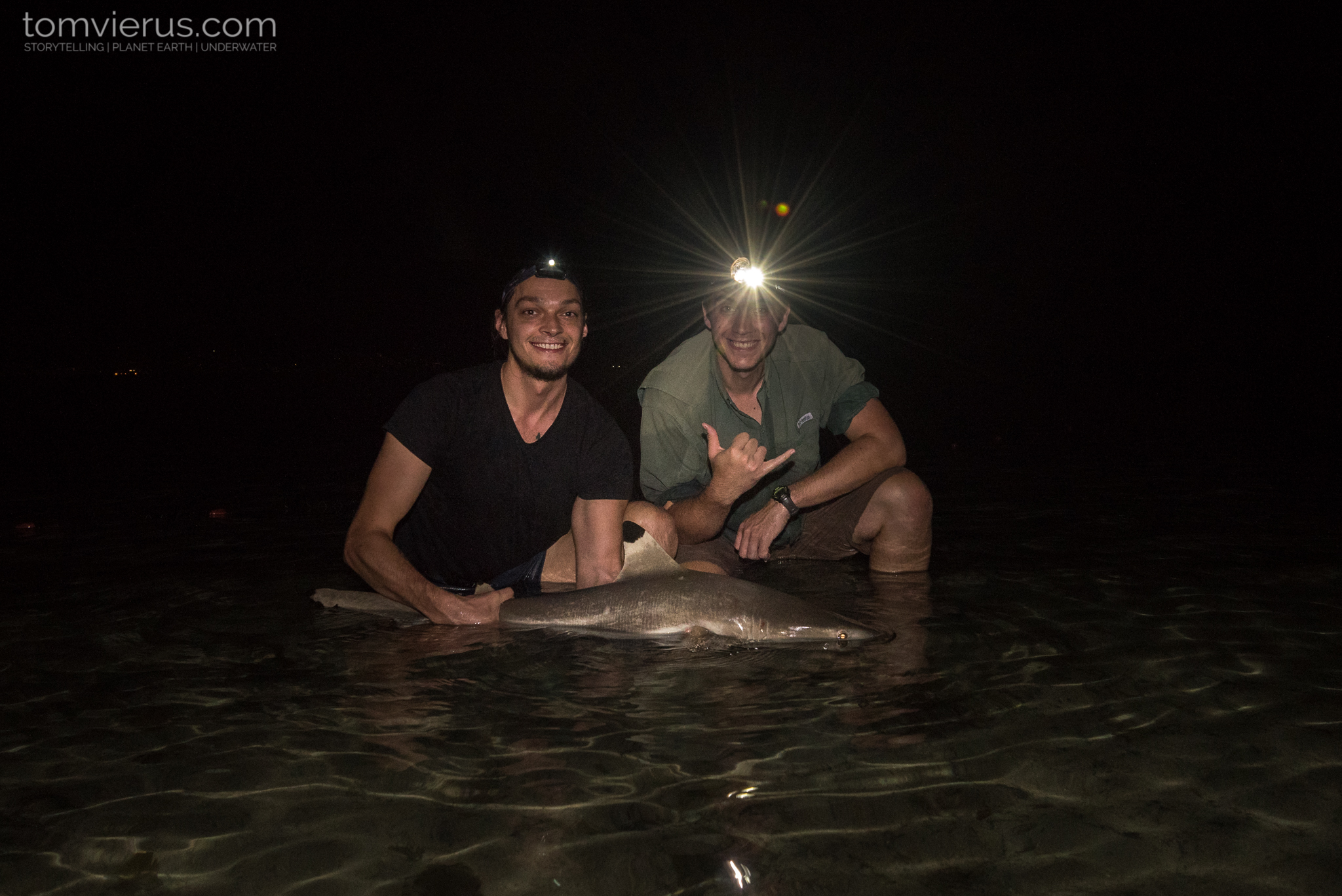 #physioshark, CRIOBE, fieldwork