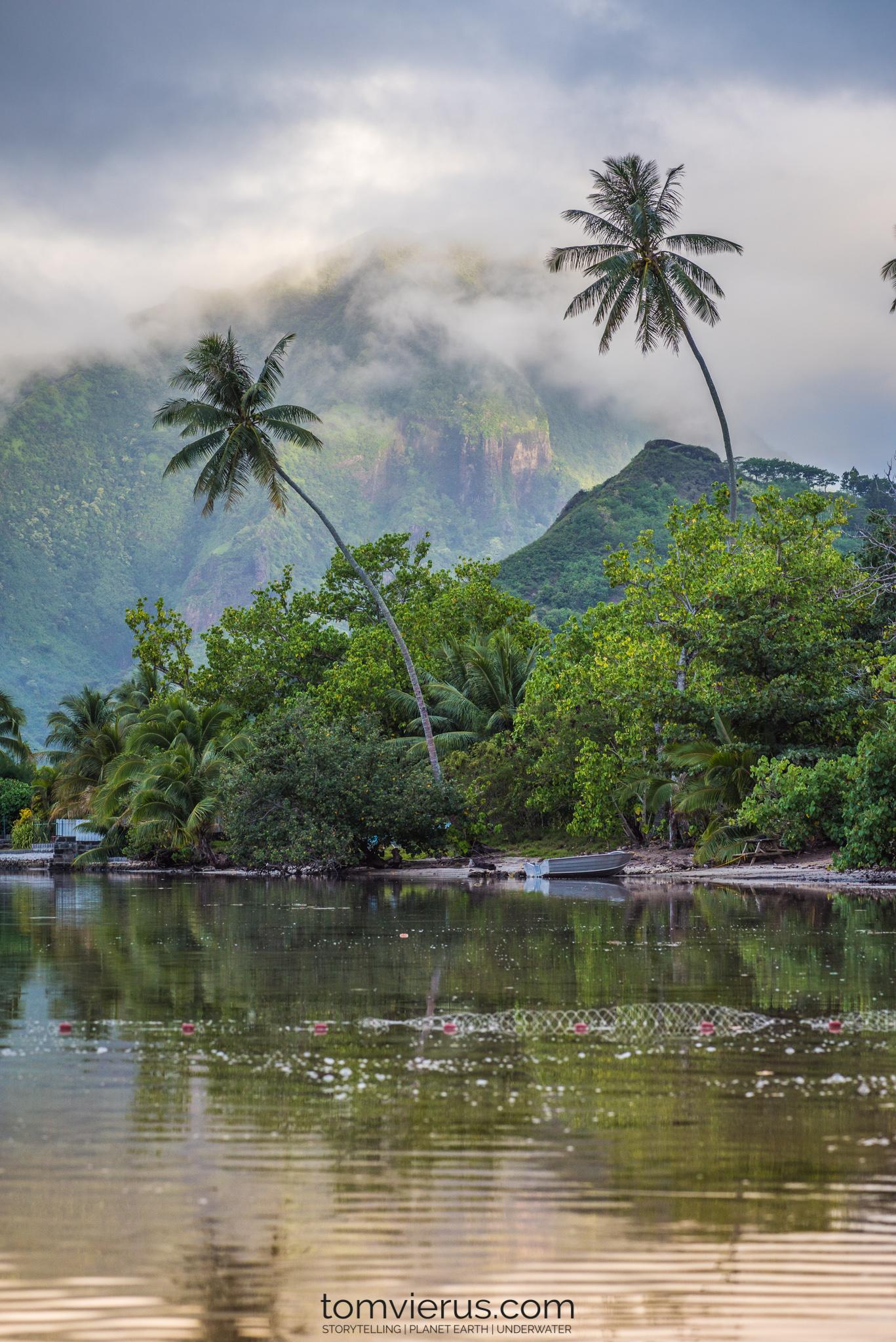 Fieldwork, Palms, Ocean, Scenic, Tropics