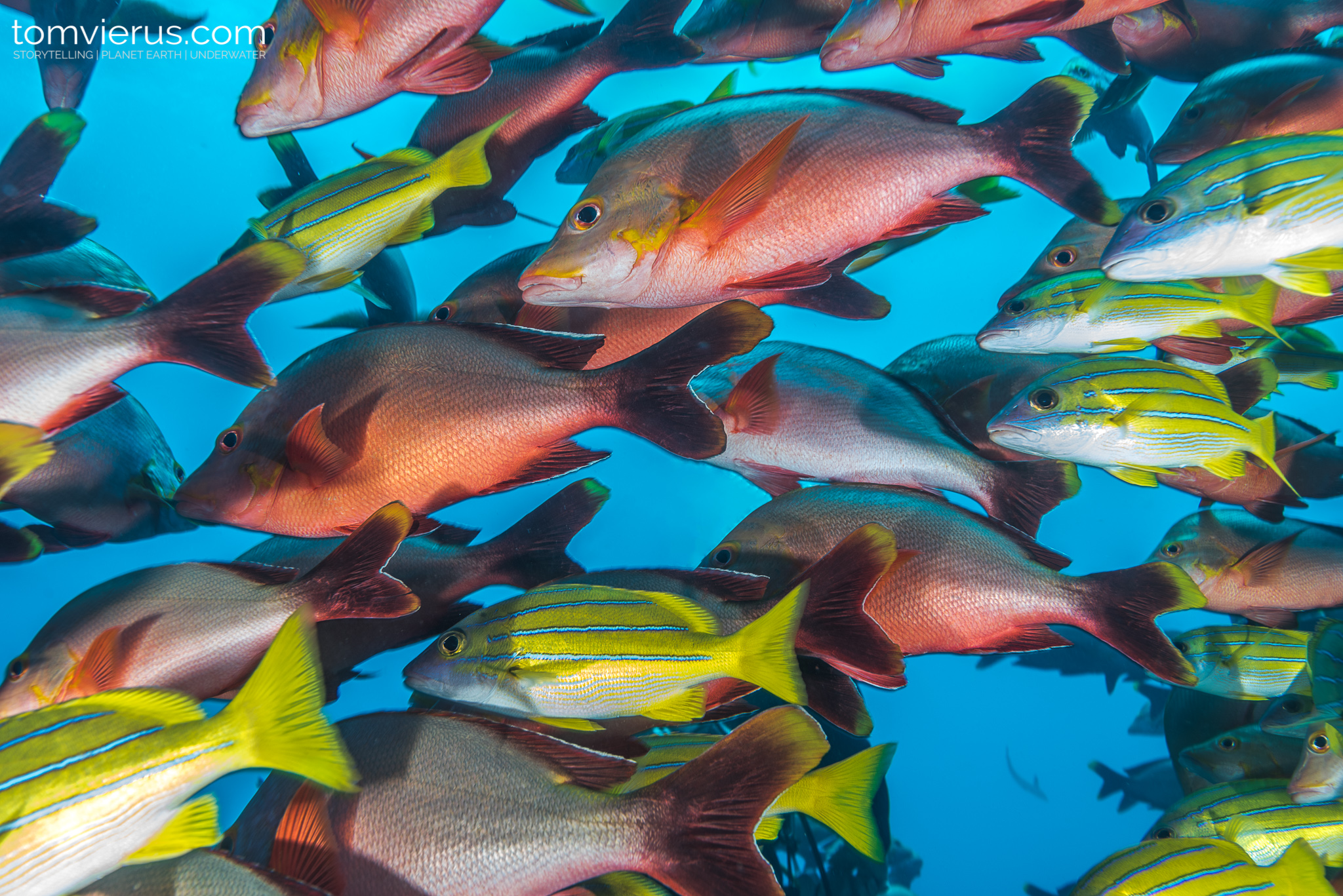 Diving, Pacific, Ocean, Valle blanche, shark dive
