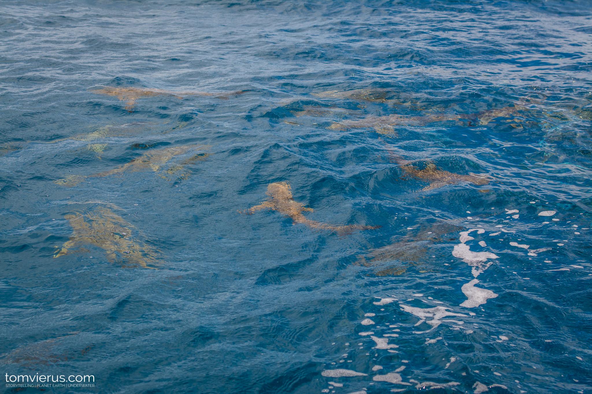Tahiti Shark Expedition, Moorea, Sharks, Diving