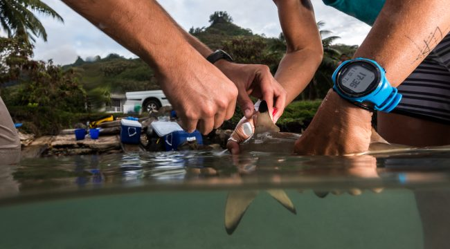 Shark Science, Physioshark, Research, Fieldwork