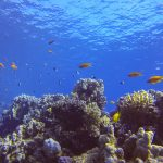 Diving, diving, diving | Dahab is awesome