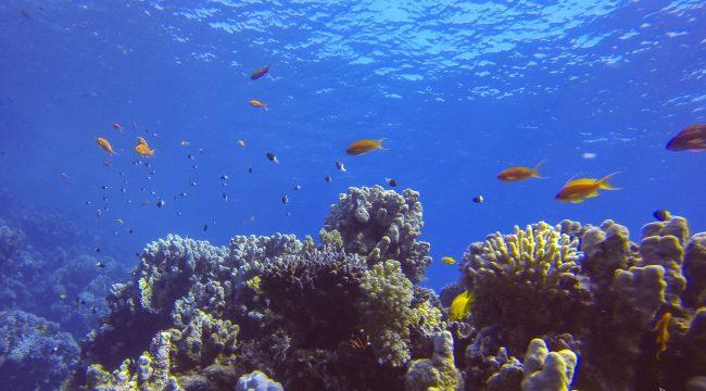 Coral Reef, Dahab, Gulf of Aqaba, Egypt