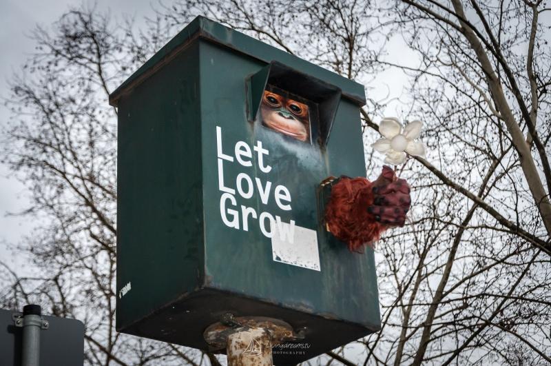 Let Love Grow!