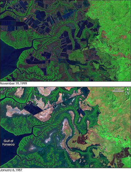 Dieses Bild zeigt die erschreckende Veränderung in einem Teil der Landschaft in Honduras zwischen 1987 und 1999. Mangroven mussten für Aquakulturen weichen. Quelle: https://commons.wikimedia.org/wiki/File:ShrimpFarming_Honduras_L7_1987-99.jpg