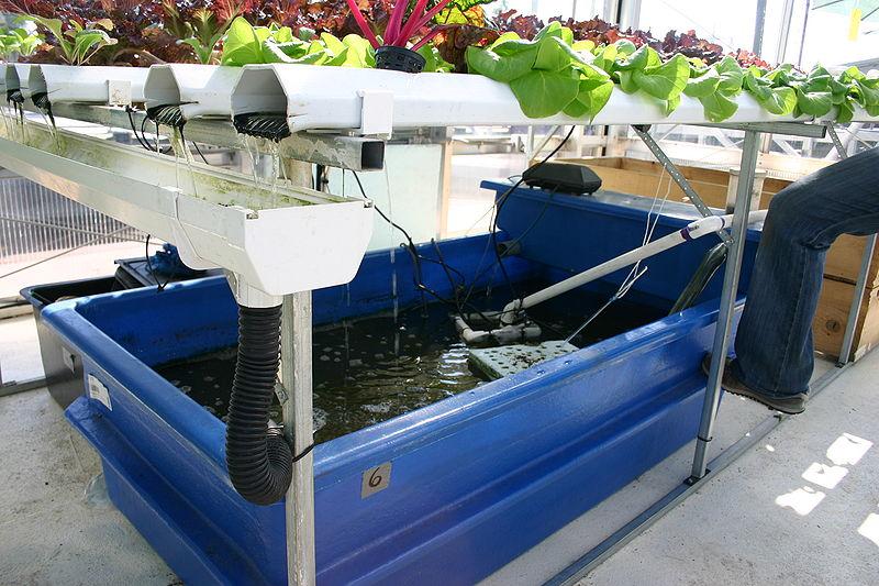 Solche Hydroponik-Anlagen sind vielversprechend: Die Fische im Becken sorgen für ausreichende Nährstoffversorgung der Pflanzen, die wiederum Würmer versorgen, von denen sich der Fisch ernährt. https://commons.wikimedia.org/wiki/File :Aquaponics_with_ catfish.jpg