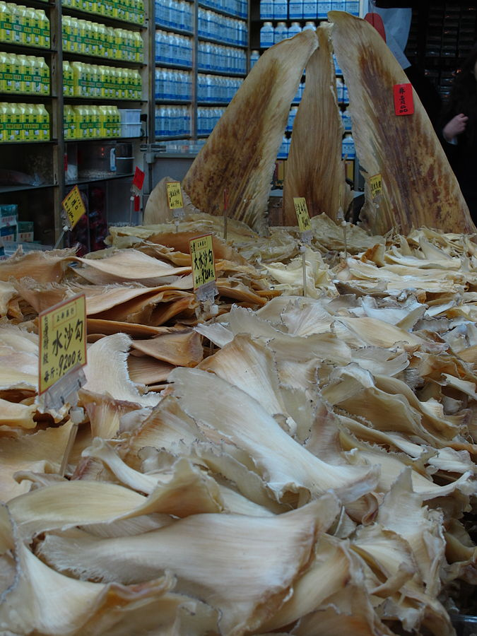 "Hundreds of fins ready to be purchases in a Asian store. The demand for shark fin is putting enormous pressure on populations all around the world. Photo by Eazy traveler - source""Shark fins Taiwan"" von Eazy traveler - http://www.flickr.com/photos/eazy360/4384639150/in/photostream/. Lizenziert unter CC BY 2.0 über Wikimedia Commons - http://commons.wikimedia.org/wiki/File:Shark_fins_Taiwan.jpg#/media/File:Shark_fins_Taiwan.jpg"