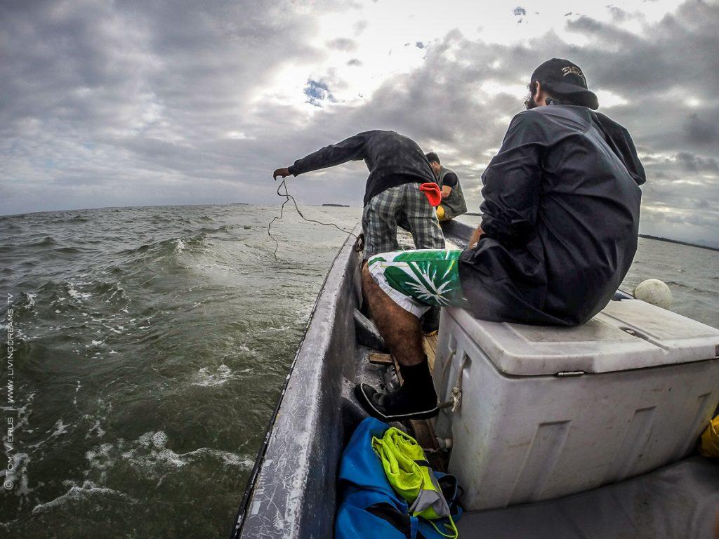Sampling for hammerhead sharks in the Rewa River, Suva