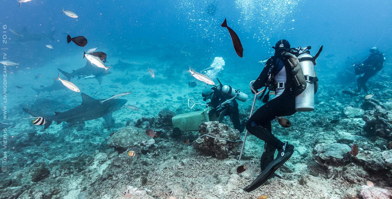 Beqa Adventure Divers, Fiji, Sharks