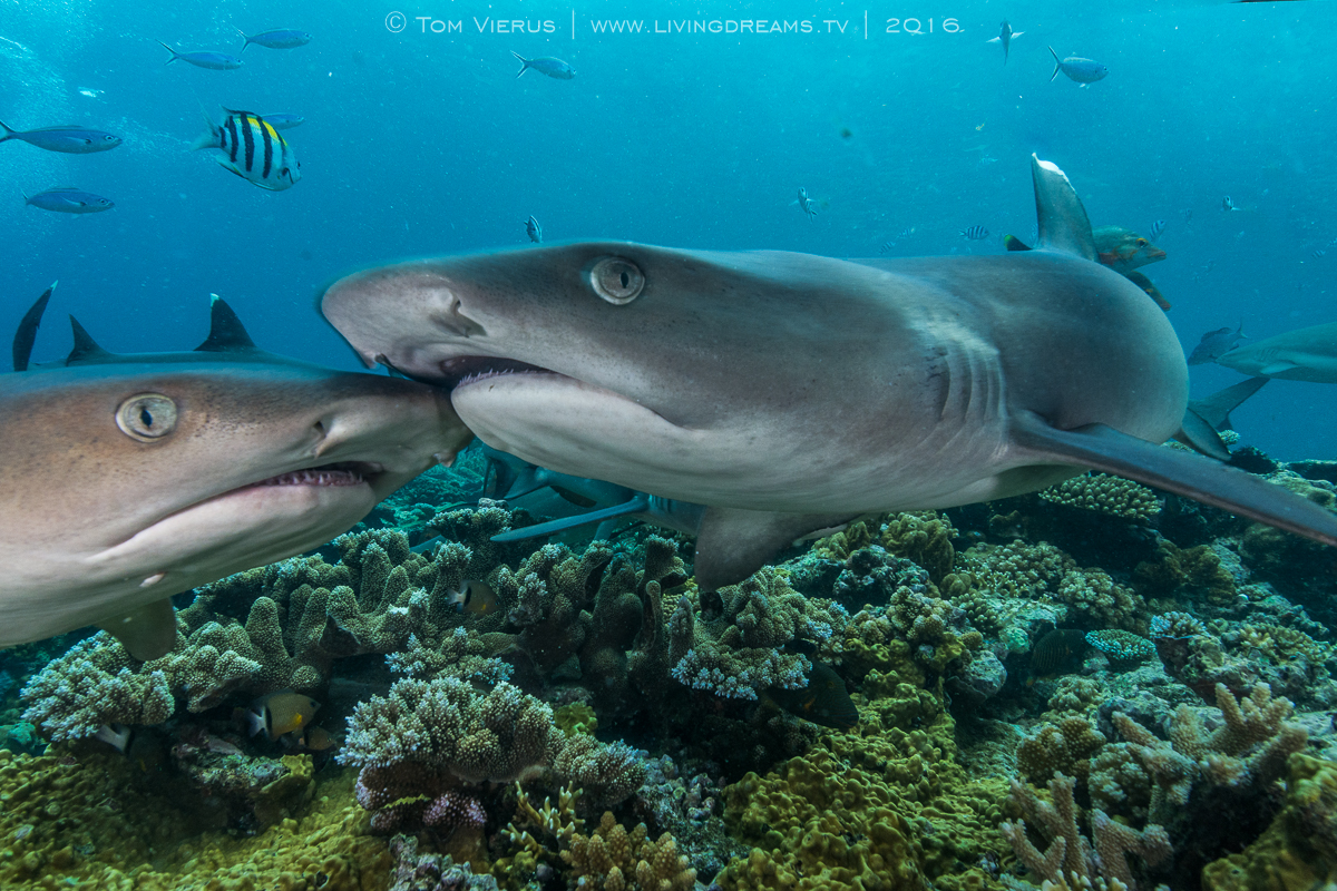 Beqa Adventure Divers, Sharks, Photography