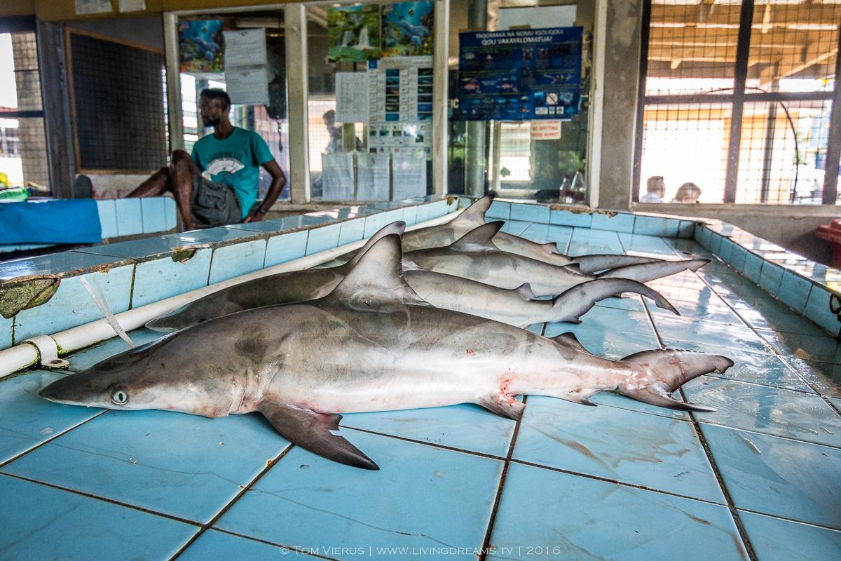 Fieldwork, Fiji, ISATEC, Tag & Release, Shark nursery