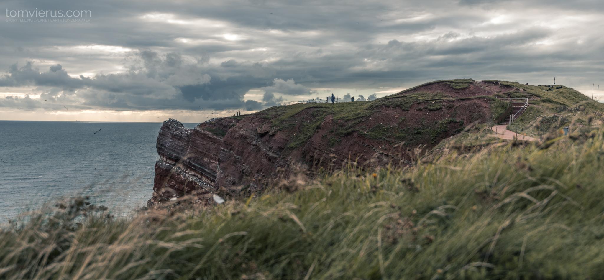 Helgoland, seabirds, cliffs