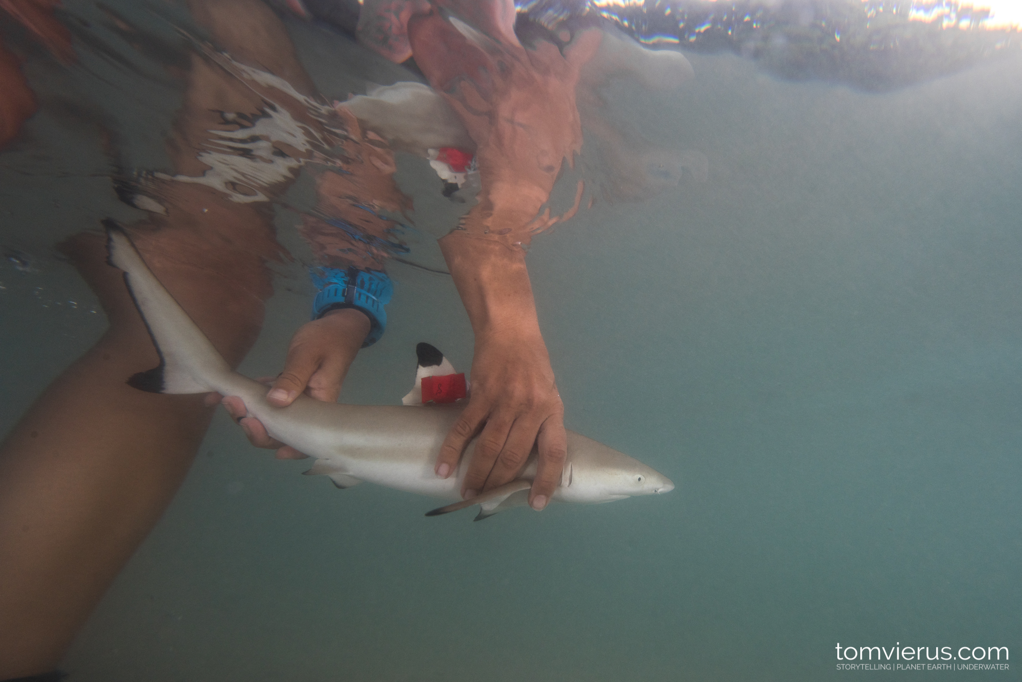 Shark Science, Physioshark, Research, Fieldwork