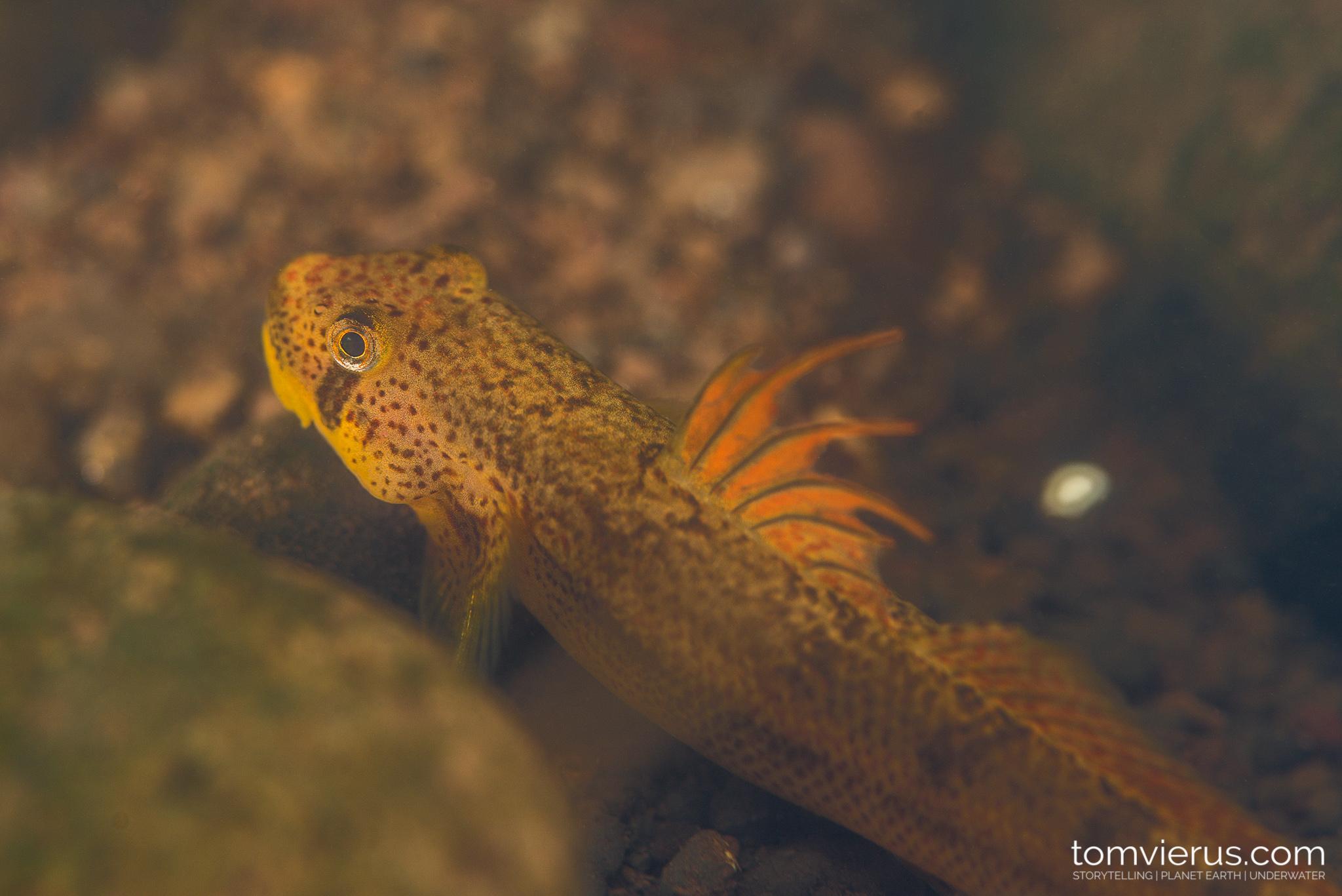 Stream, tiver, underwater, fish, tropics, fish life,