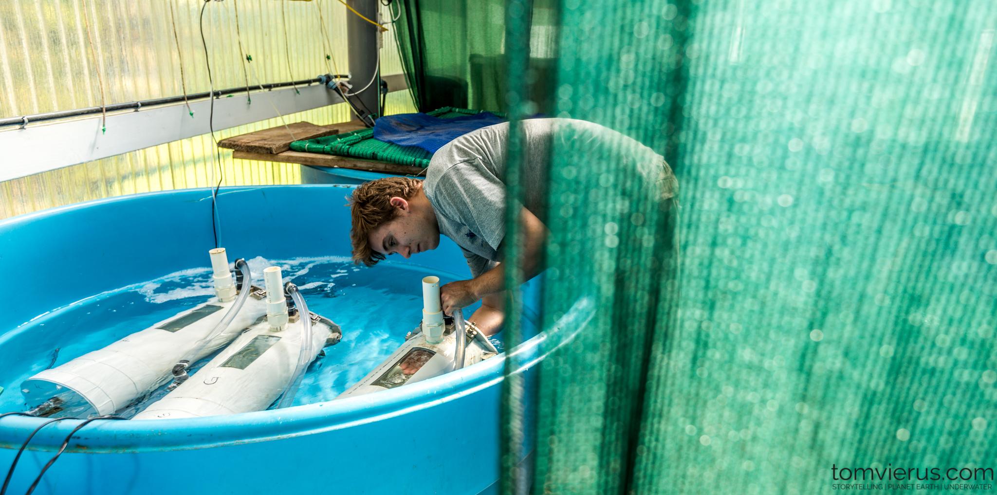 Shark Science, Physioshark, Research, Fieldwork, Respirometry, CRIOBE