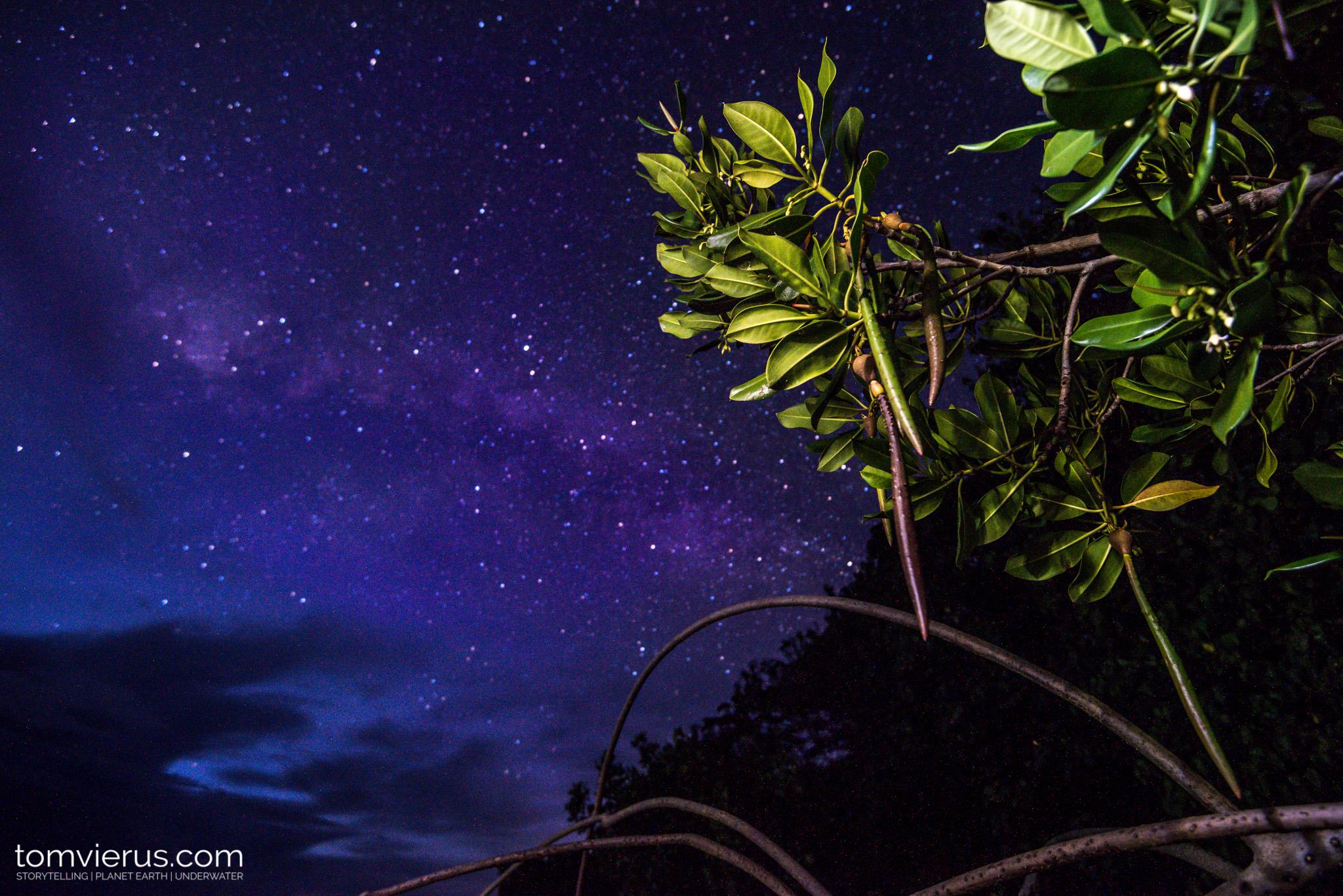 Mangroves, Sharks, Tropics, French Polynesia, Habitat, Nursery