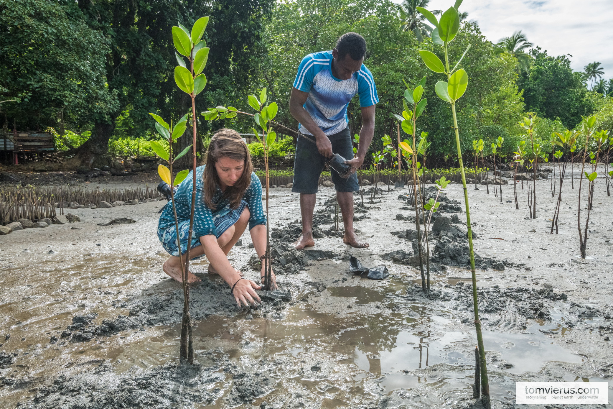 Mangrove planting on Beqa, Fiji