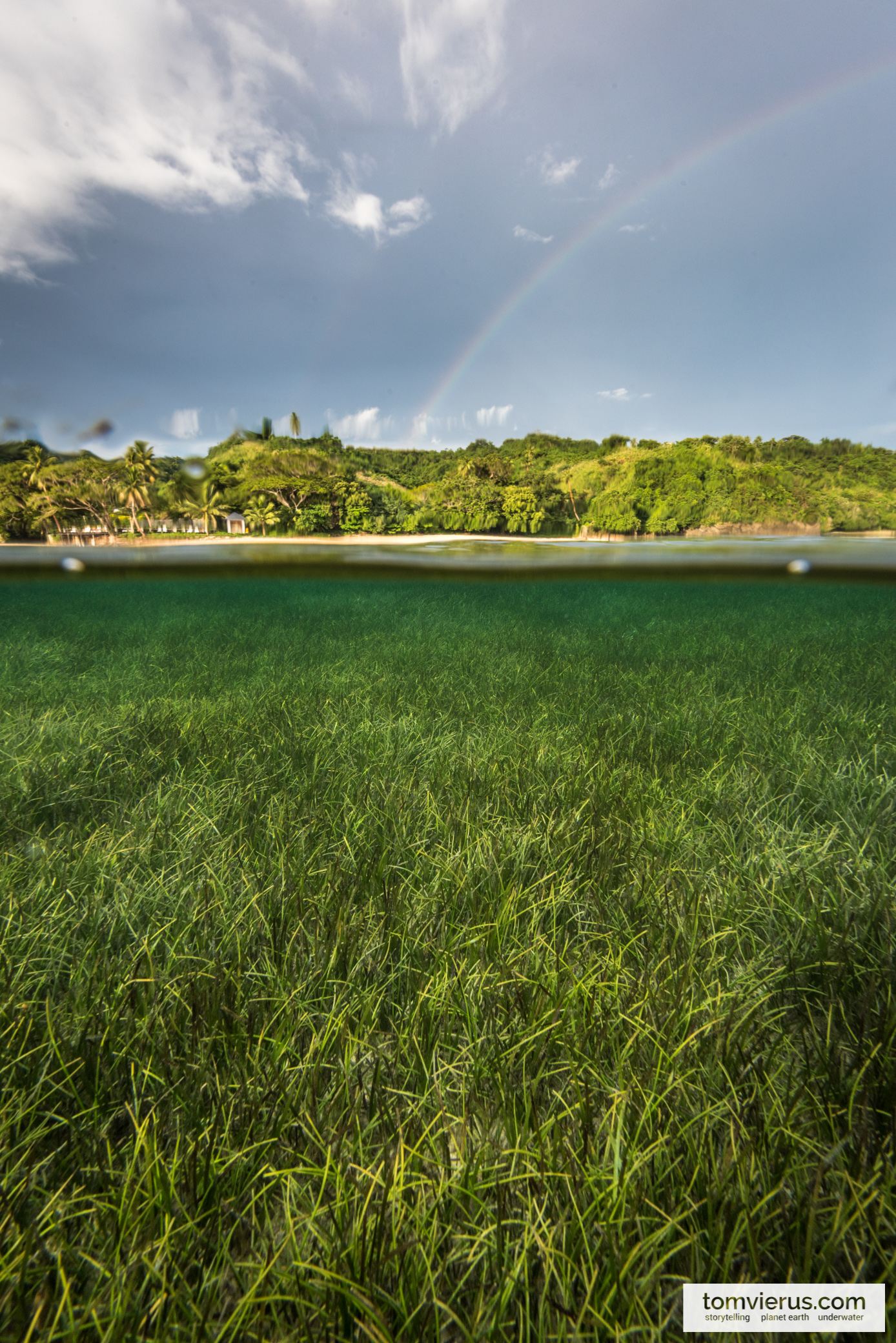 Seagrass meadow at the Coral Coast in Fiji